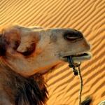 Marruecos III. Excursión al desierto, ¿sí o no?