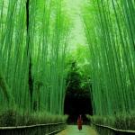 Kyoto III. Del oro de Kinkaku-ji al bambú de Arashiyama