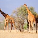 Kenya Día 1. Ruta Nairobi-Samburu
