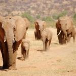 Viaje a Kenya: la guía