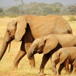 Kenya Día 2. Samburu: la tribu