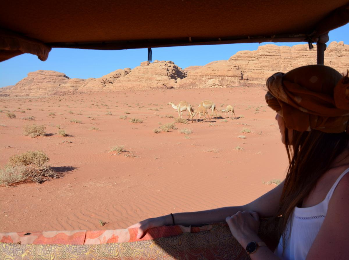 wadi rum en jeep